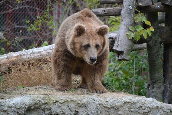 medved zoo palic