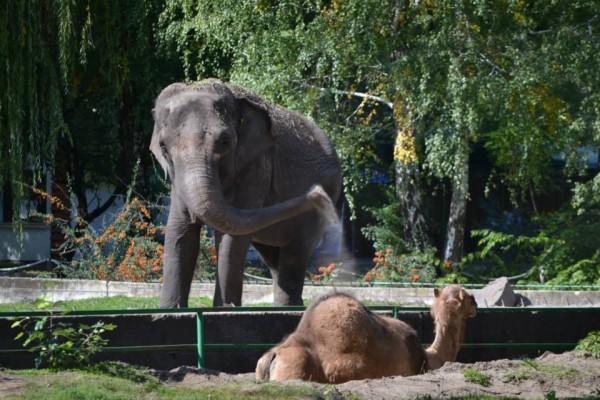 slonica marta