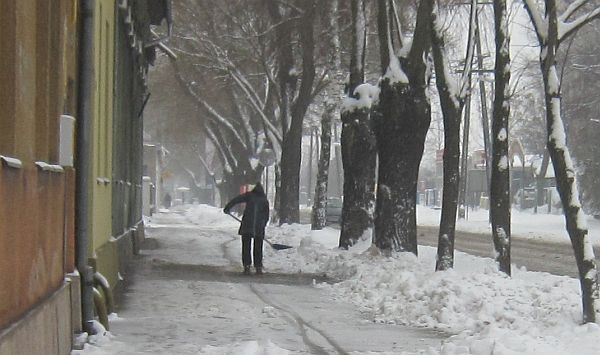 subotica jovana milica ulica