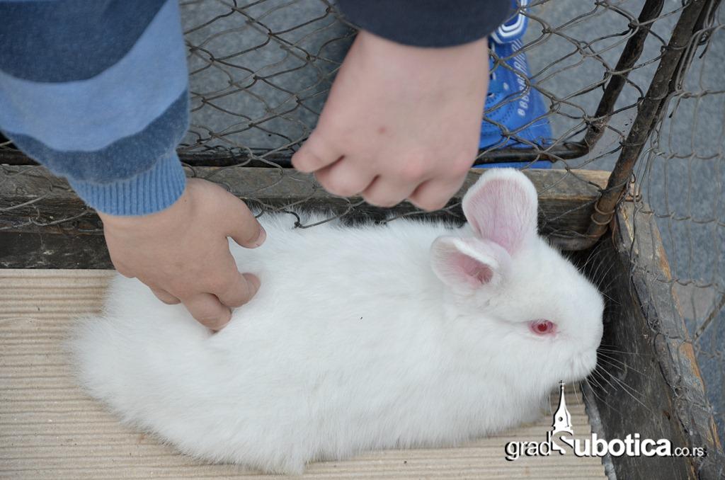 Velika subota - mazenje zeceva (8)