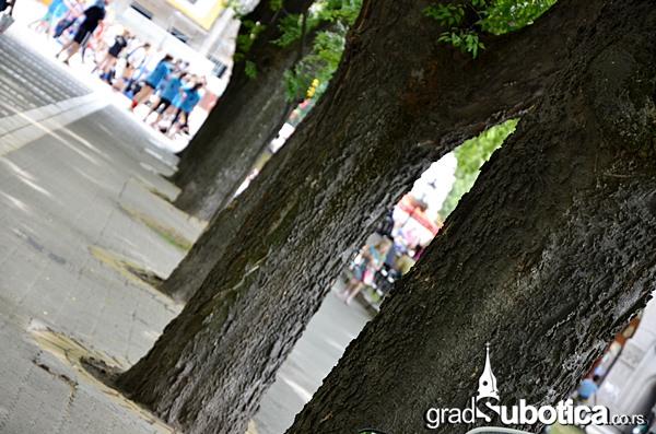 Drvo nije bilbord ciscenje (2)
