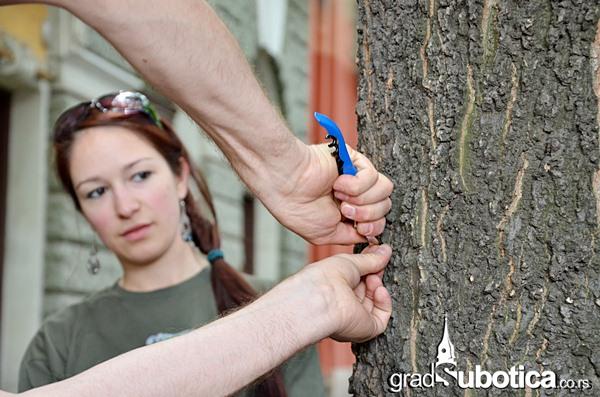 Drvo nije bilbord ciscenje (8)