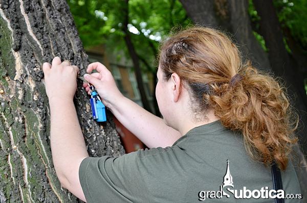 Drvo nije bilbord ciscenje (9)